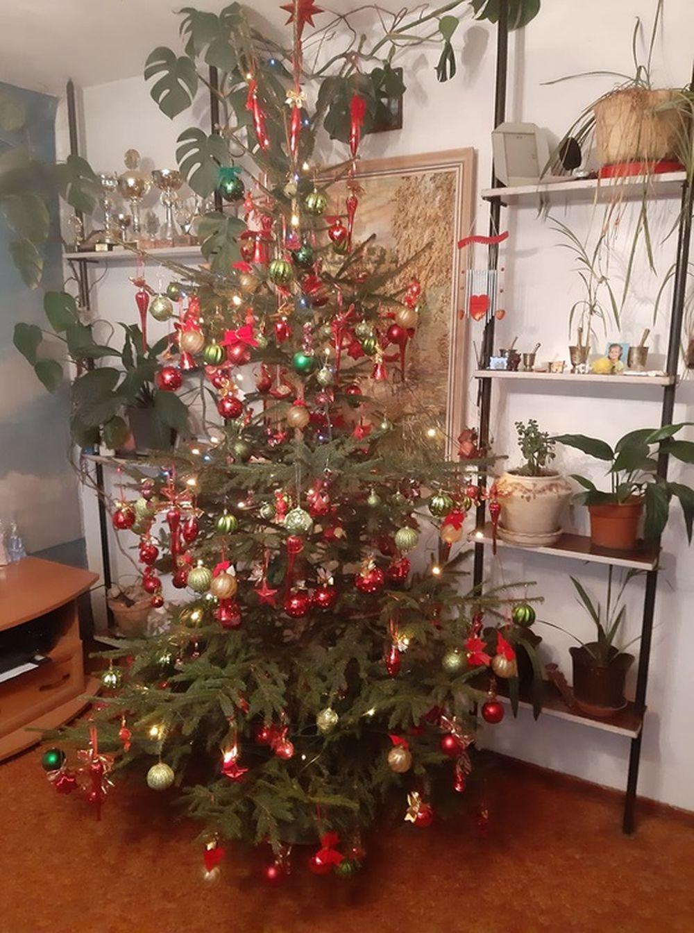 FOTO: Vianočné stromčeky v Žiline - výber fotografií našich čitateľov, foto 66