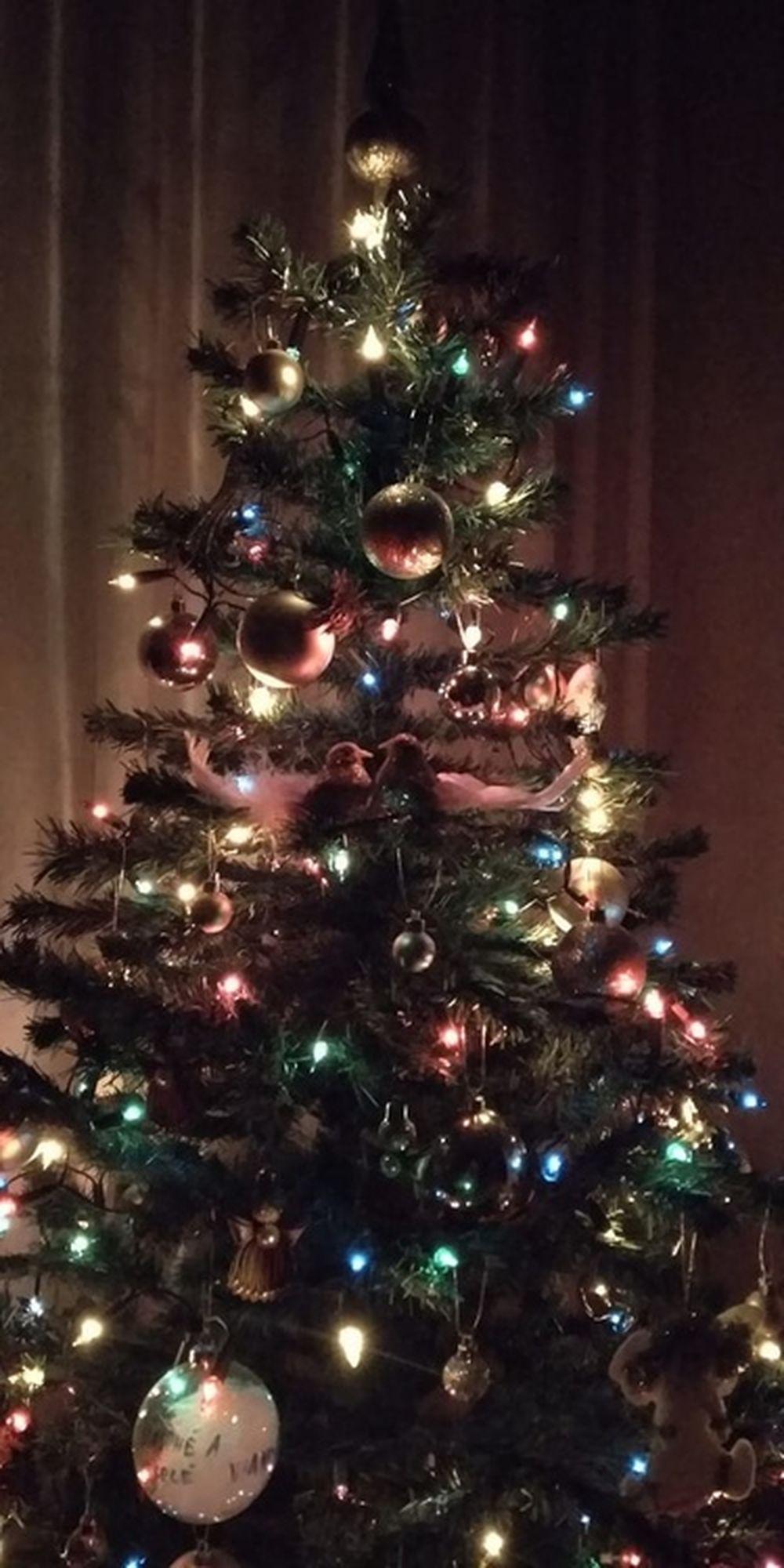 FOTO: Vianočné stromčeky v Žiline - výber fotografií našich čitateľov, foto 69