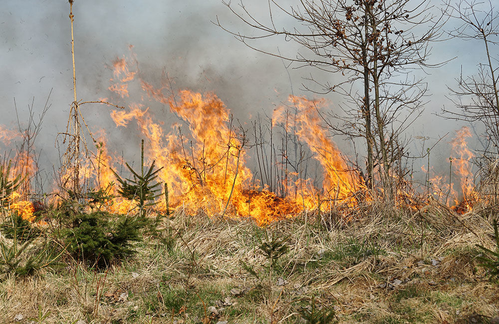 FOTO: Les medzi Rosinou a Trnovým je v plameňoch, zasahuje množstvo hasičov, foto 2