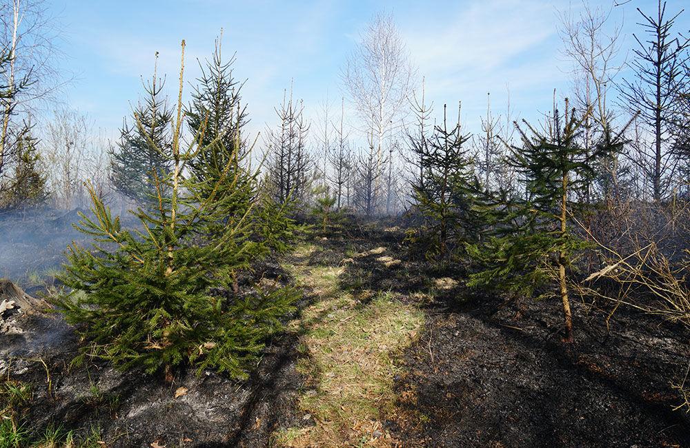 FOTO: Les medzi Rosinou a Trnovým je v plameňoch, zasahuje množstvo hasičov, foto 3