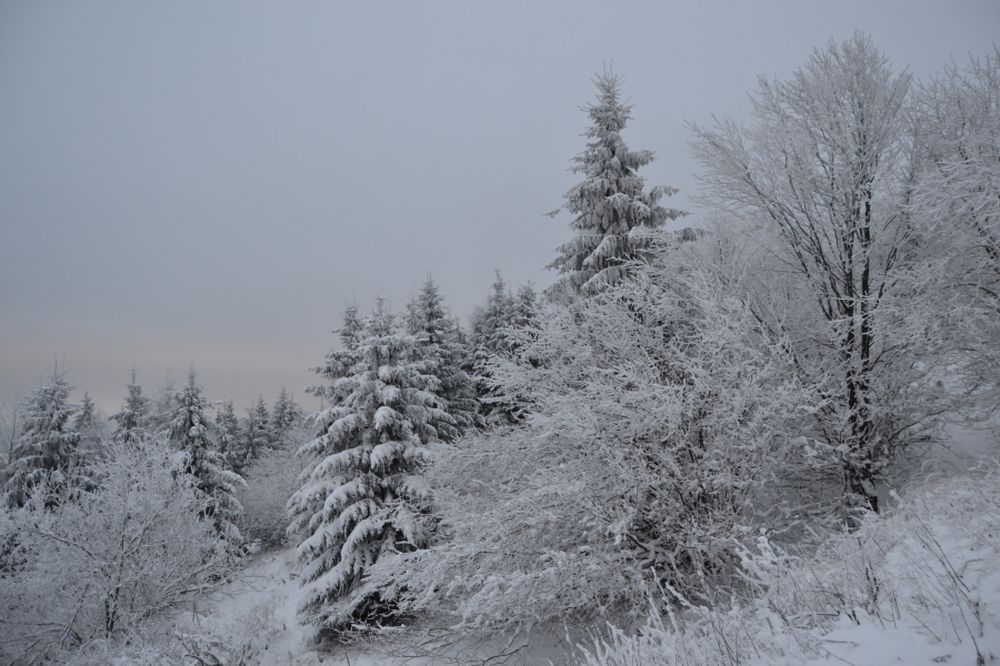 Polom 1.decembra 2013, foto 2