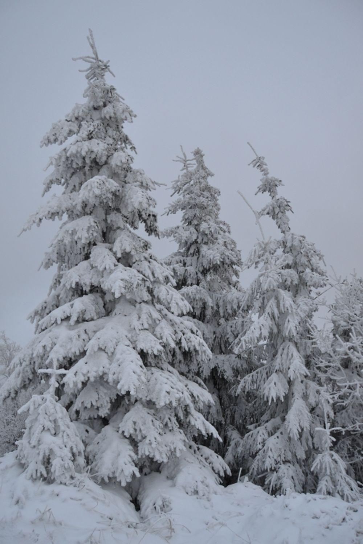 Polom 1.decembra 2013, foto 3
