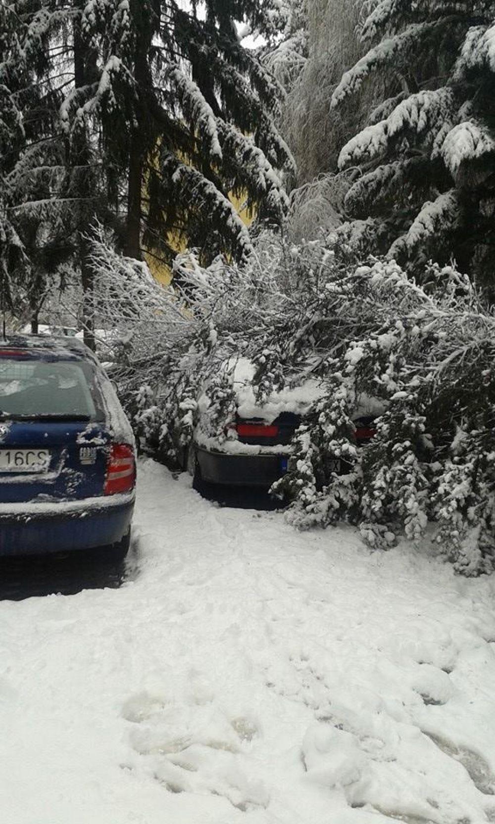V noci padali stromy na cestu na viacerých miestach v Žiline , foto 2