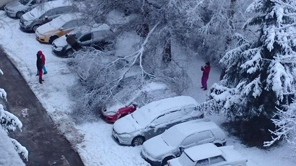 V noci padali stromy na cestu na viacerých miestach v Žiline , foto 3