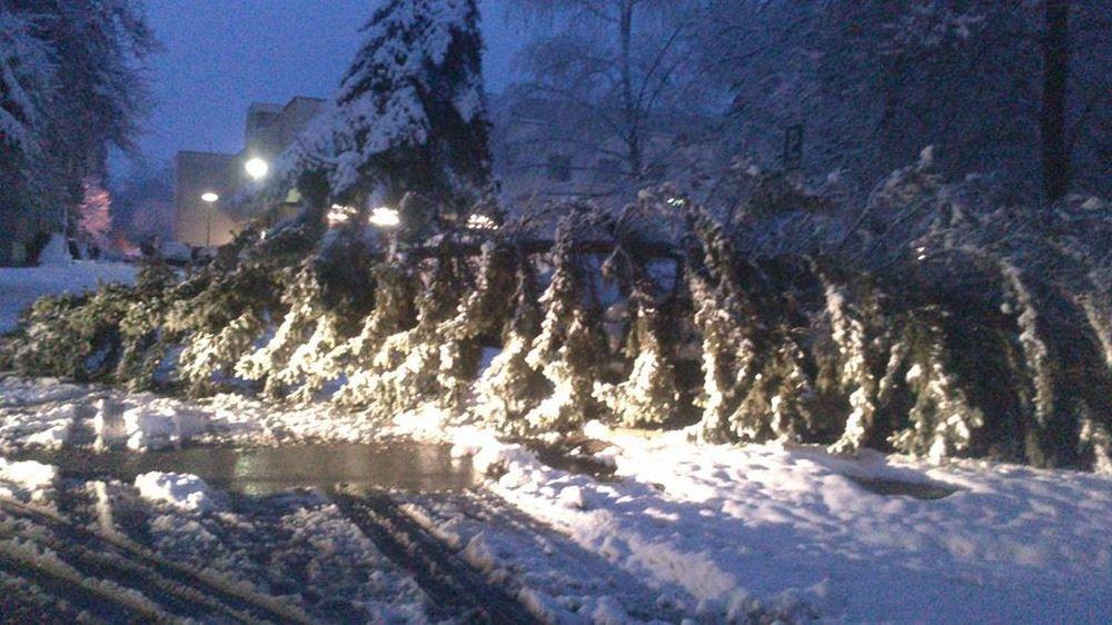 V noci padali stromy na cestu na viacerých miestach v Žiline , foto 4