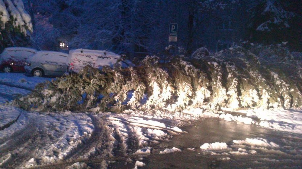 V noci padali stromy na cestu na viacerých miestach v Žiline , foto 5