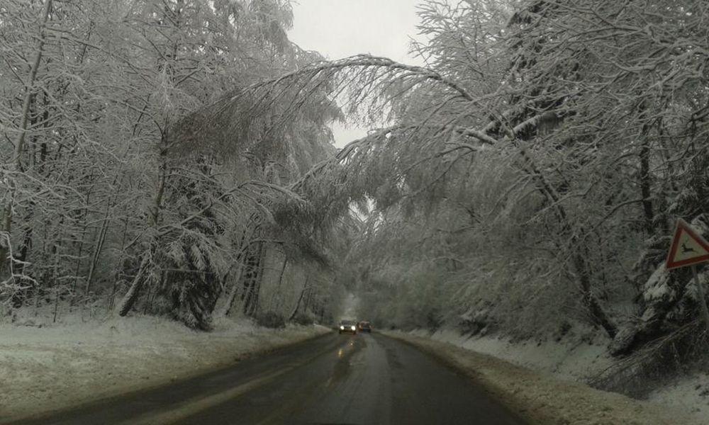 V noci padali stromy na cestu na viacerých miestach v Žiline , foto 6