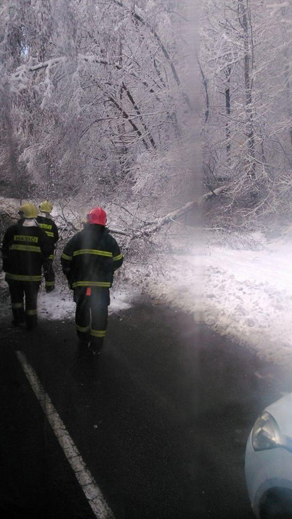 V noci padali stromy na cestu na viacerých miestach v Žiline , foto 9
