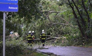Spadnutý strom na ceste pri Žilinskej univerzite 25.7.2015