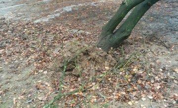 Neudržiavaná verejná zeleň na sídlisku Hliny