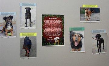 Výstava a zbierka pre psíky z útulku