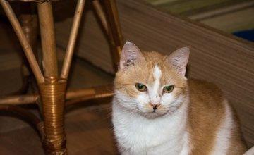 27 mačiek, ktoré zostali v byte zrazenej ženy na ulici Spanyolova