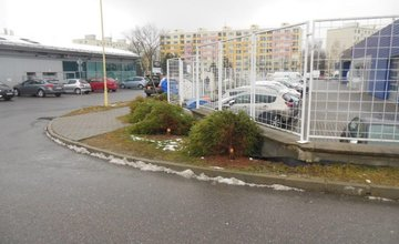 Zrezané stromčeky na ulici Pod Hliniskom, sídlisko Solinky