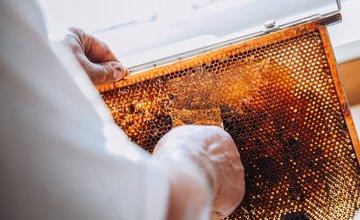 Bezplatný kurz pre začínajúcich včelárov
