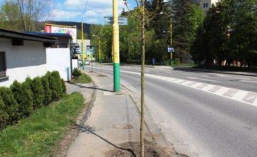 Na Veľkej okružnej ulici vzniká nové stromoradie