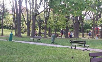 Spadnutý strom Tajovského 6.5.2016