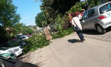 Spadnutý strom Hlboká cesta 6.6.2016