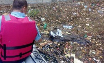 Záchrana mačky pod priehradným múrom na Vodnom diele Žilina