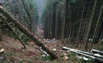 Zavalený lesný pracovník - 15.3.2017