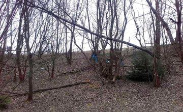 Nebezpečné stromy na sídlisku Solinky, ulica Obvodová