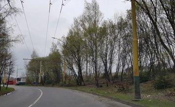 Nebezpečné stromy na sídlisku Solinky vyrezali