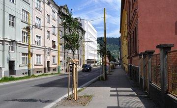 Výsadba nových stromov ulica 1. mája