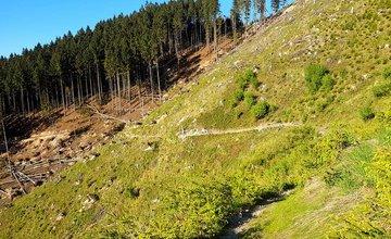 V okolí Chaty pod Suchým aj pri Minčole sa vo veľkom ťaží drevo