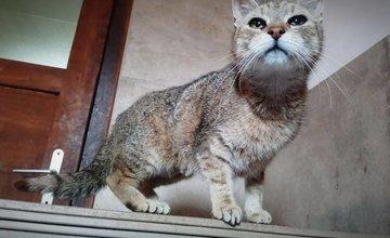 V Žiline kastrovali pouličné mačiatka