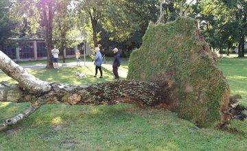 FOTO: Počas silnej búrky v Žiline popadalo viacero stromov