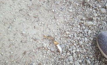 Rozhádzané odpadky Lesopark Chrasť Žilina