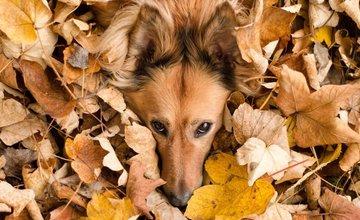 FOTO: Jesenné zábery Žiliny a okolia od našich čitateľov