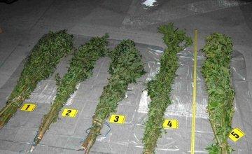 Zaistené veľké množstvo marihuany počas kontroly auta v Krásne nad Kysucou