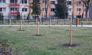 V Dobšinského sade na sídlisku Vlčince už vysadili ovocné stromy