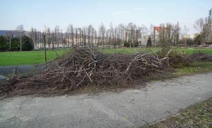 FOTO: Výrub stromov na športovisku v areáli Žilinskej univerzity
