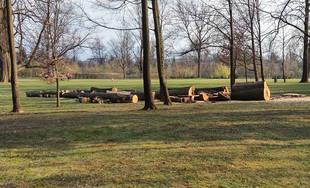 Výrub dvoch stromov v areáli Budatínskeho parku