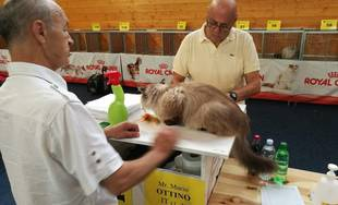 Výstava mačiek 2018 v Žiline