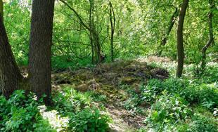 Záhradkári a dobrovoľníci čistili okraj žilinského lesoparku od bioodpadu