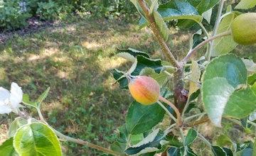 Dobšinského sad na sídlisku Vlčince má lúku z poľných kvetov aj prvé ovocie