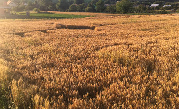 FOTO: Pri Rajeckých Tepliciach sa objavil obrazec v obilí, pravdepodobne je to pokus o senzáciu