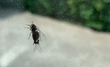 FOTO: Na území mesta Žilina je zvýšený výskyt okrídlených mravcov