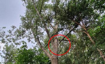 FOTO: Ľudí v parku na Rosinkách ohrozujú padajúce konáre a stromy