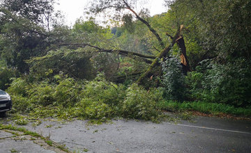 FOTO: Spadnutý strom odstavil v sobotu dopravu na Kvačalovej ulici
