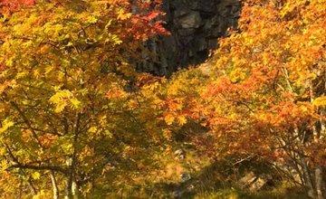 FOTO: Jeseň v Žiline a okolí na záberoch od našich čitateľov
