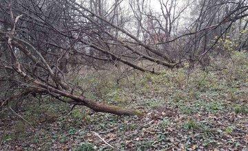 V ovocnom sade pod Hájikom začalo mesto odstraňovať náletové a plevelné dreviny