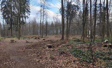 Výrub stromov napadnutých lykožrútom v žilinskom lesoparku