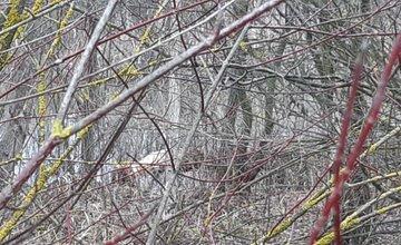 FOTO: Výskyt bobra Vodného v Žiline - oblasť biokoridoru