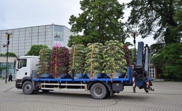 FOTO: V centre Žiliny rozmiestňujú 20 kvetinových pyramíd s rozkvitnutými petúniami