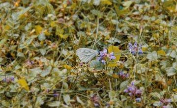FOTO: Vo vonkajšej zóne FRI UNIZA vyhradili lúku pre motýle