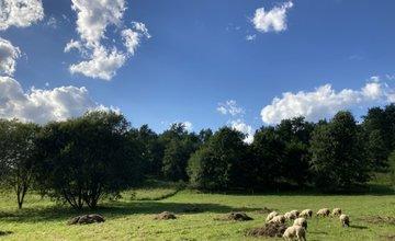 FOTO: Sad Slobody v Žiline kosia dobrovoľníci kosami, pomáhajú im aj ovce
