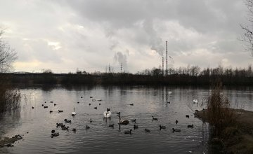 FOTO: Nesprávne prikrmovanie vtáctva